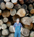 Logs at a timberyard